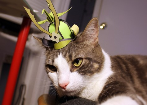 tiny_hats_on_cats12