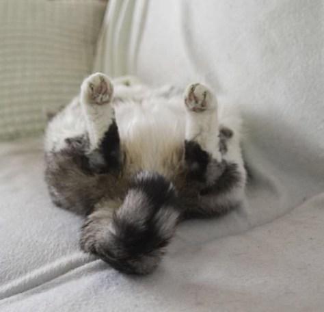 【猫画像】ちょっと内股