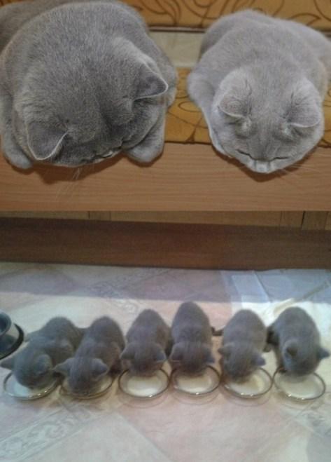 【猫画像】子を見守る親猫