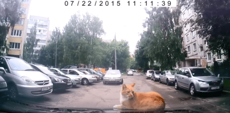 cat_vs_car06