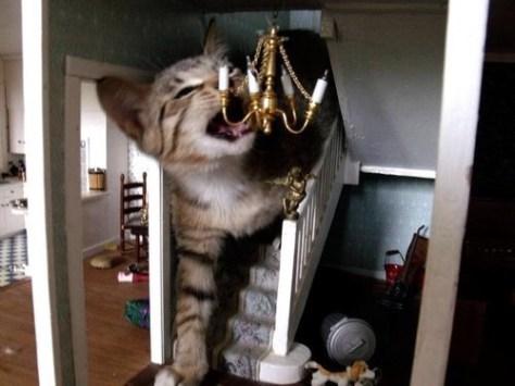 【猫画像】巨大猫が乱入!?