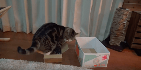 cat_likes_boxes03