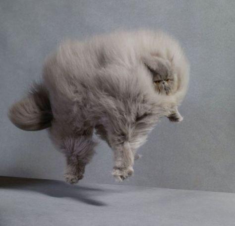 fluffy_cats01