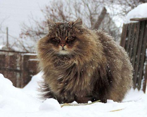 fluffy_cats05