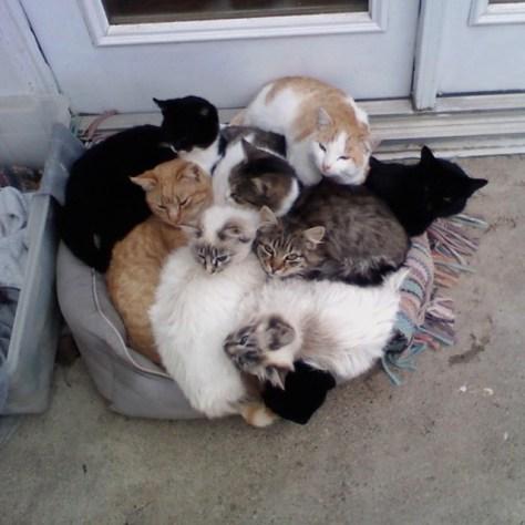 【猫画像】寒がり