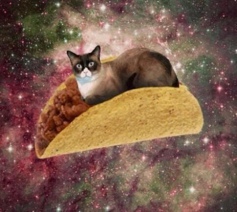 【猫画像】猫・タコス・宇宙