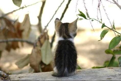 【猫画像】背中が語る・・・