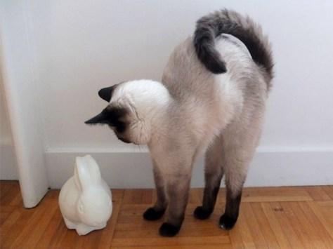 【猫画像】やや威嚇!?