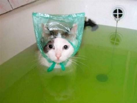 【猫画像】防水仕様?