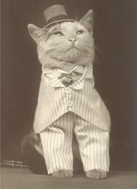 【猫画像】レトロ猫