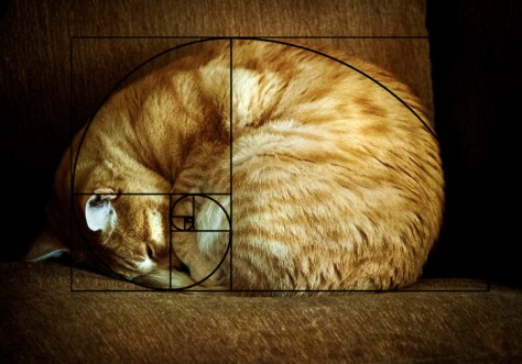 cat_furbonacci_sequence09
