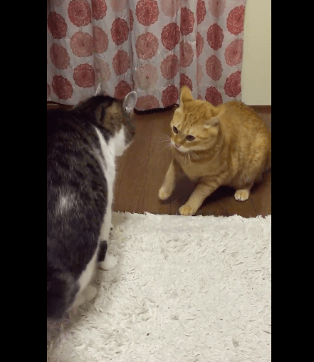 cats_fighting_style01
