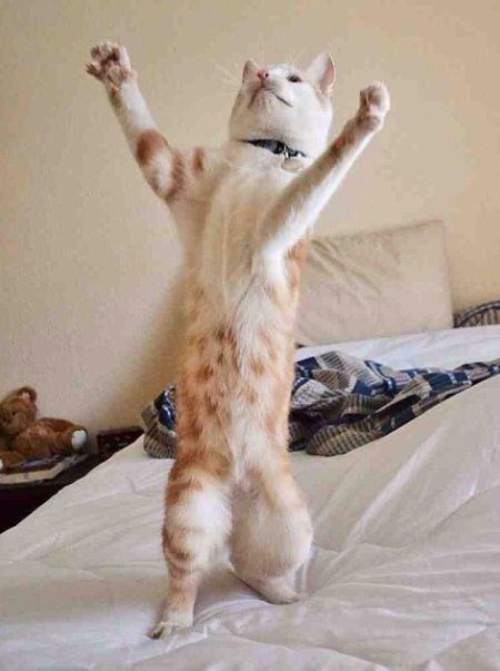 【猫画像】戦闘態勢