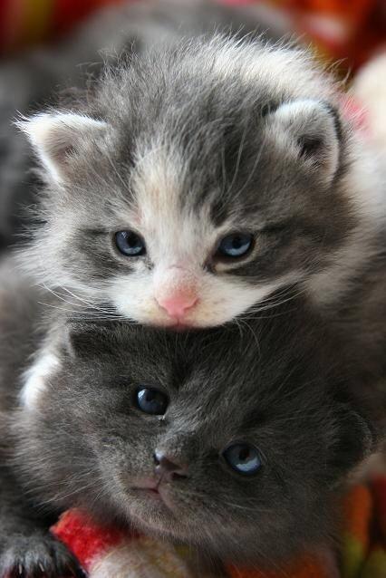 【猫画像】2段子猫