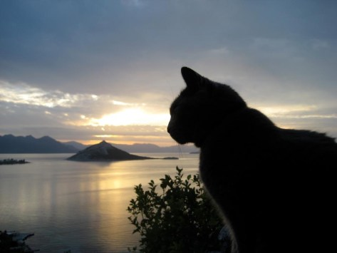 【猫画像】たそがれ・・・