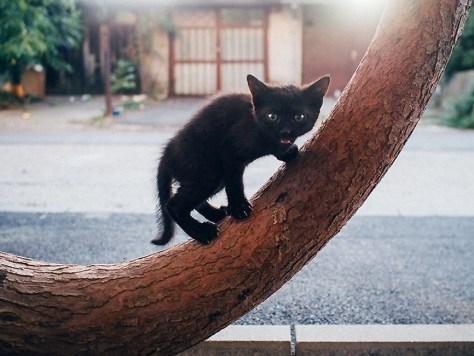【猫画像】ミャー