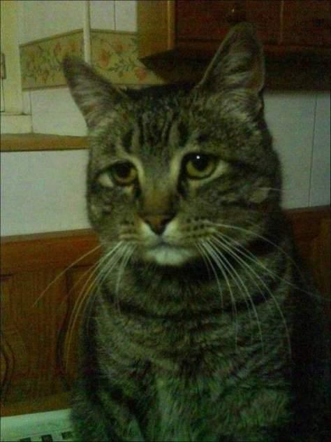 【猫画像】がっかり顏