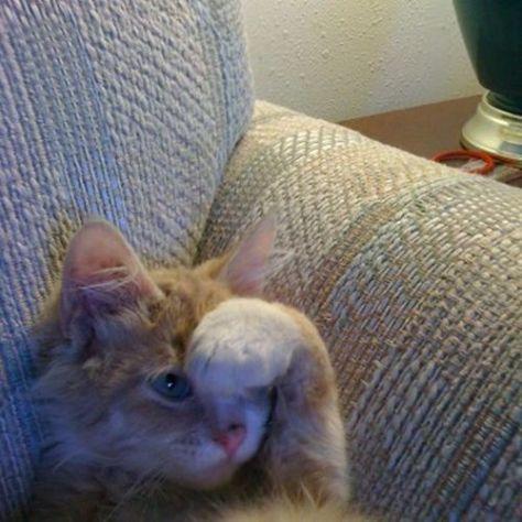 【猫画像】怖いけど見たい・・・
