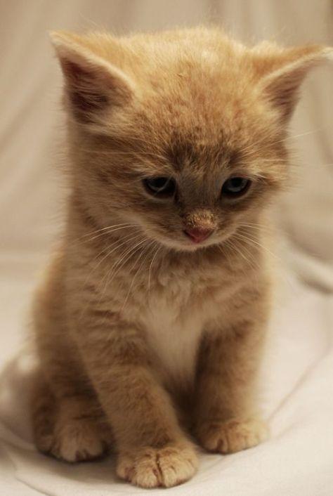 【猫画像】ふわふわ子猫