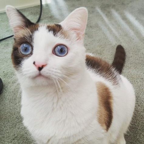 【猫画像】じっ・・・