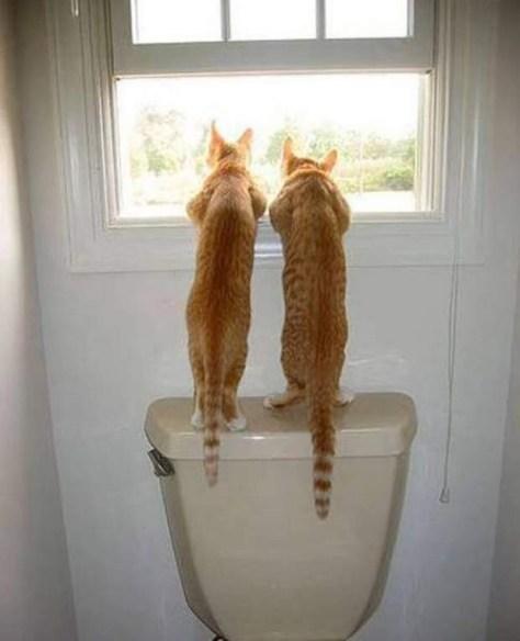 【猫画像】どれどれ?