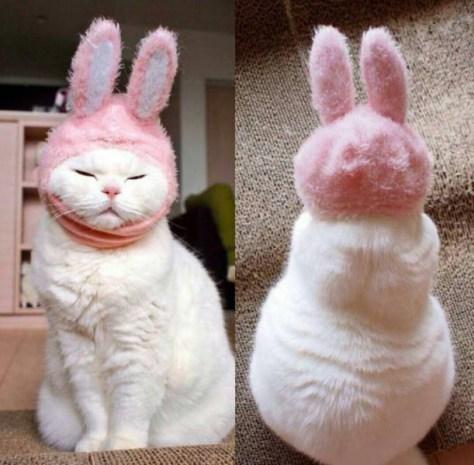 【猫画像】不機嫌なウサギ!?
