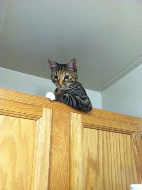 【猫画像】何か用か?