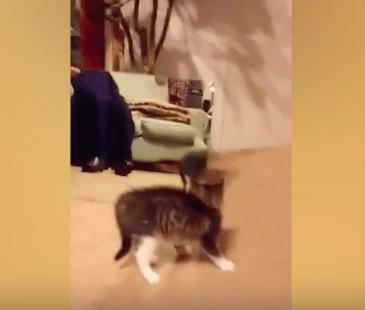 kitten_plays_reflection04