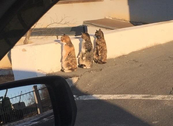 【猫ネタ】ギョッとするかも!?ネットで話題の思わず二度見してしまいそうな猫とは・・・!?