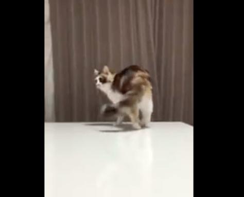 cat_fear_hand01