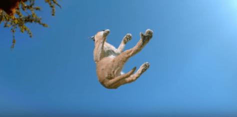 cat_landing03