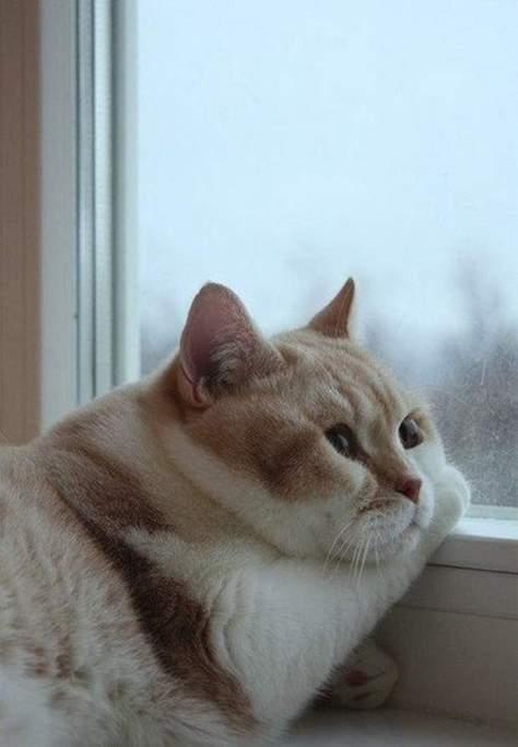 【猫画像】ムニッ