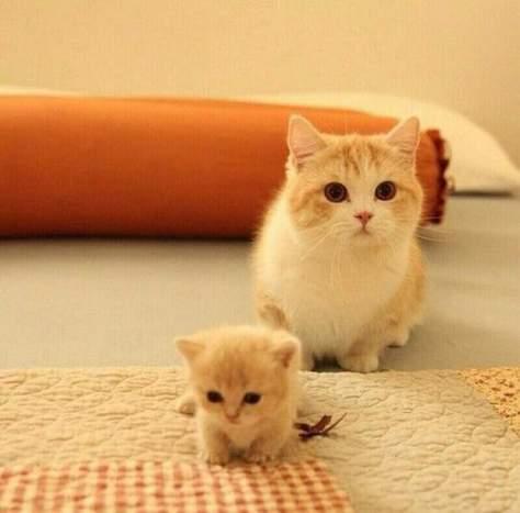 【猫画像】大と小