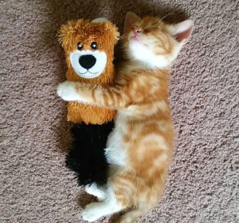 【猫画像】抱き枕?