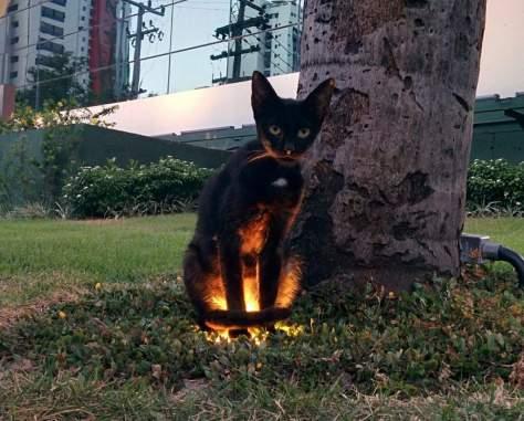 【猫画像】間接照明?