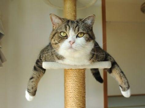 【猫画像】どーん