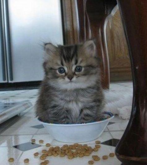 【猫画像】ちょうどエエ