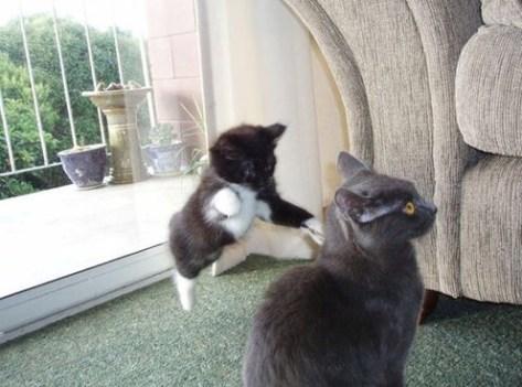 【猫画像】スキあり!