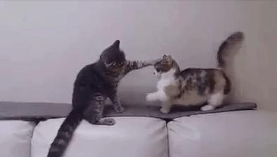 vital_cat_fight04