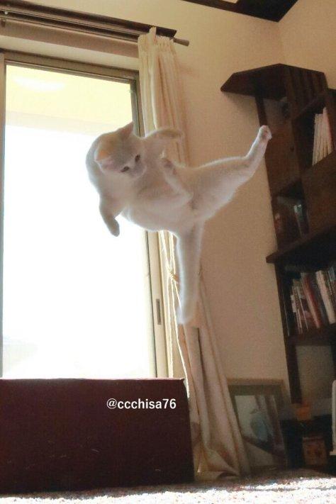 mirko_the_cat05