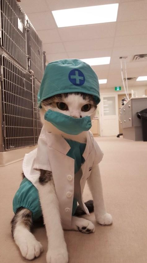 【猫画像】ドクターNEKO