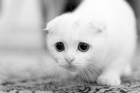 【猫画像】自信なさげ!?