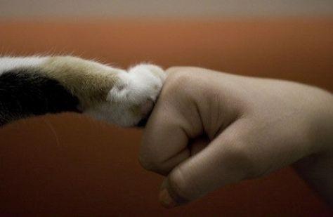 【猫画像】ガッツポーズ!?