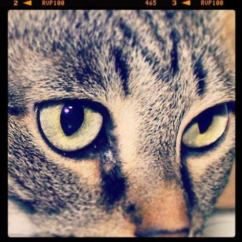 【猫画像】真剣な眼差し