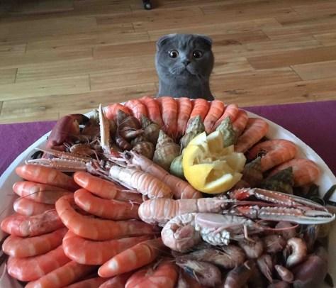 【猫画像】ゴクリっ