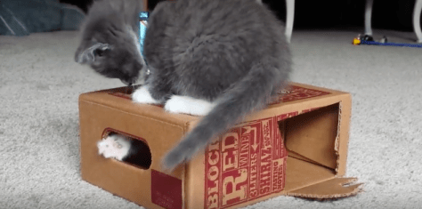 kitten_plays_winebox04