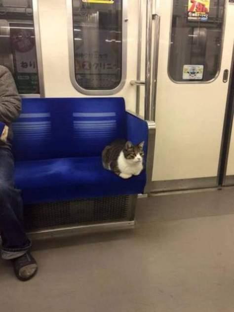 【猫画像】席をゲット!