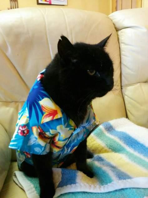 【猫画像】夏ネコ