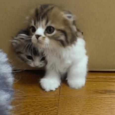 kitten_box03