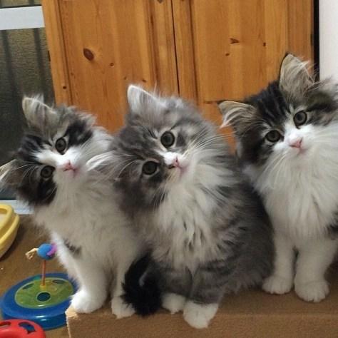 【猫画像】???